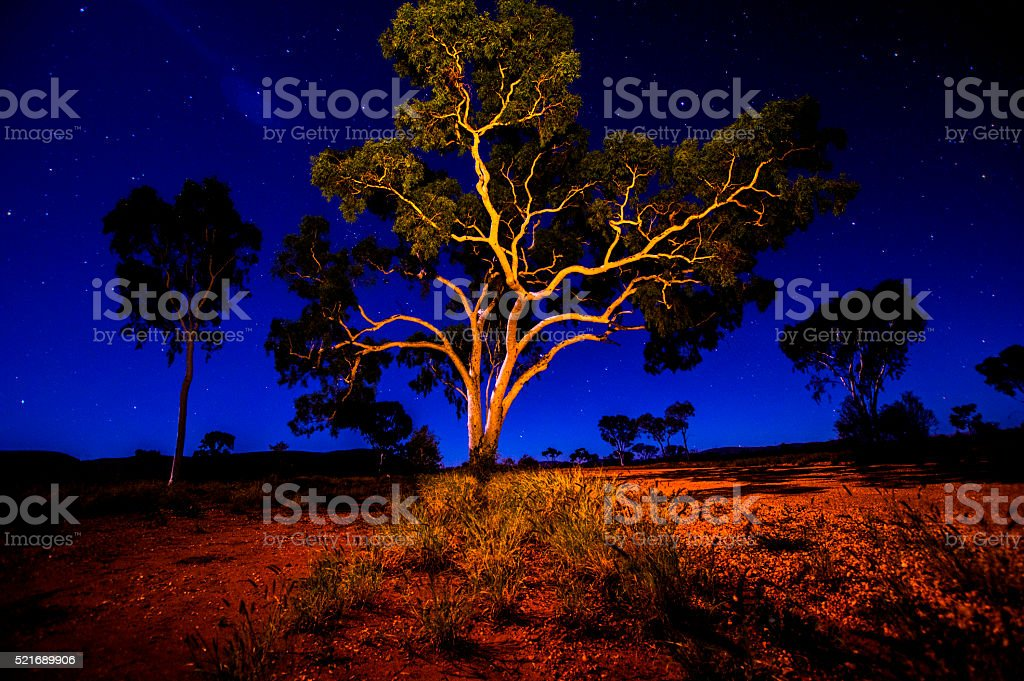 Gibson Desert Tree stock photo