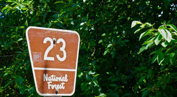 gifford pinchot forest road 23 - number 23 stock photos and pictures