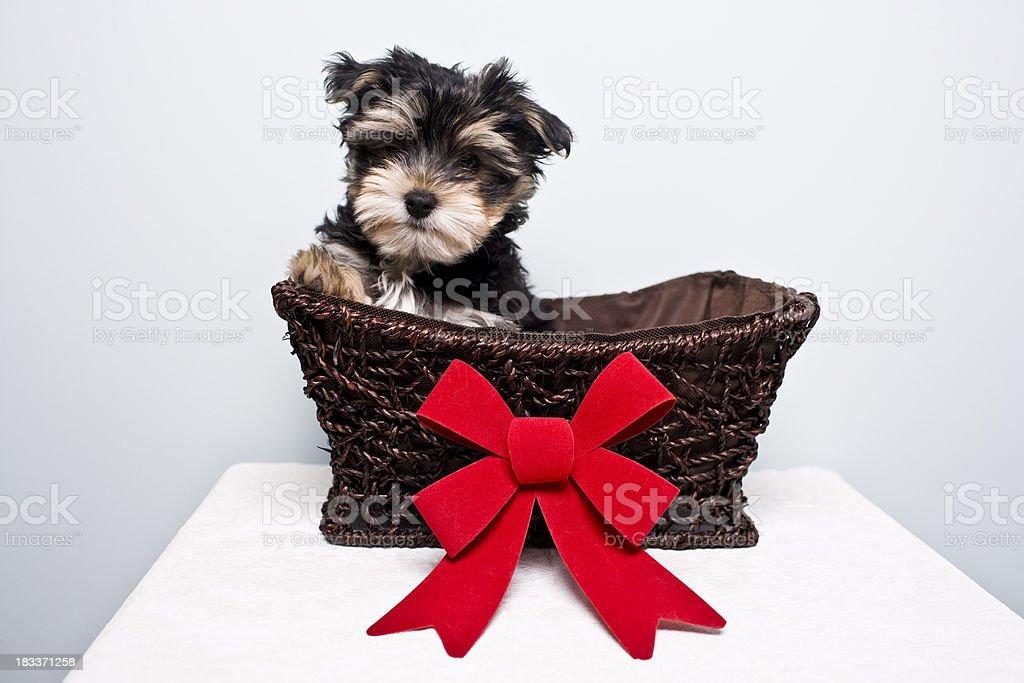 Gift Basket royalty-free stock photo