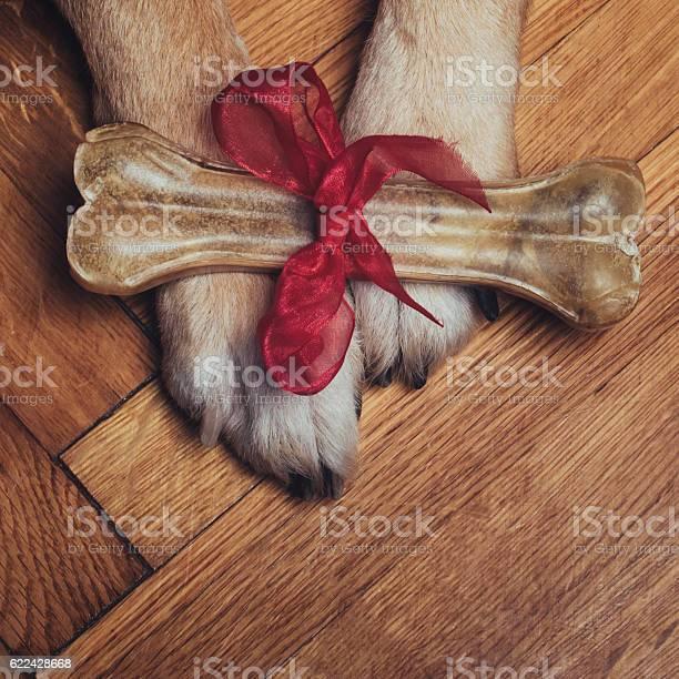 Gift bone picture id622428668?b=1&k=6&m=622428668&s=612x612&h=veeiyvdfczqlesllwmbv9eihaq5wd1zldx1ivfa5im0=