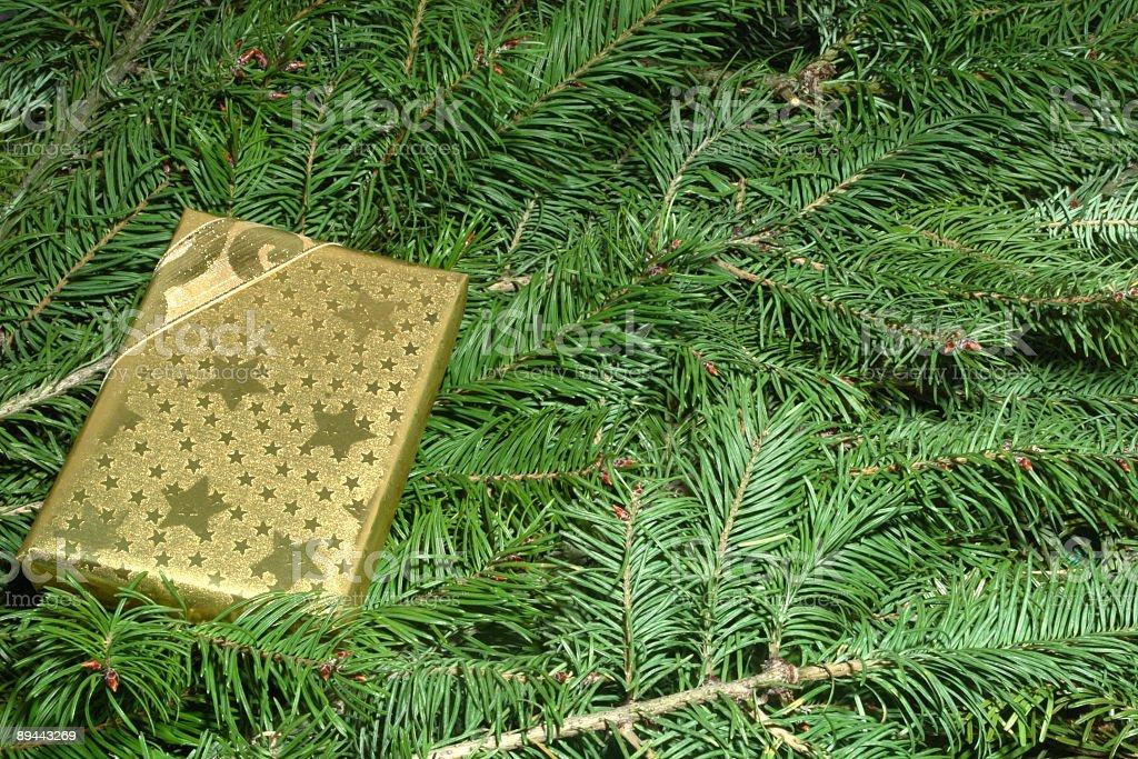 Gift Box on Pine Tree royalty-free stock photo