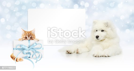 istock gift card, dog and cat with package on christmas lights background, banner copy space template 877118322