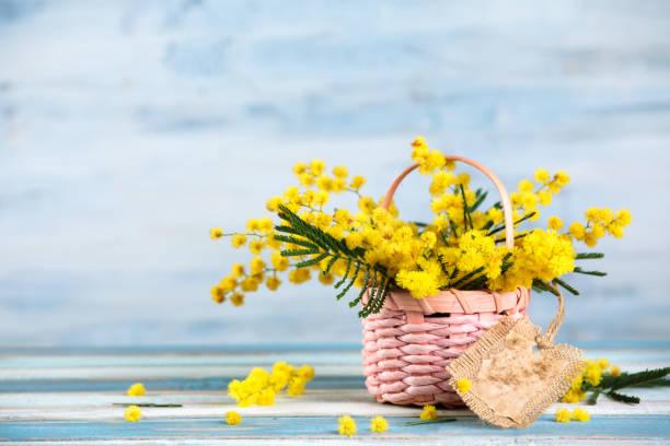 gift for spring holidays. - immagini mimosa 8 marzo foto e immagini stock