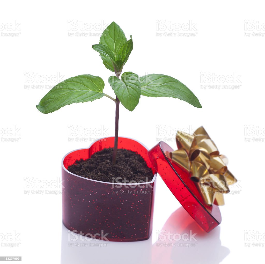 Gift of life royalty-free stock photo