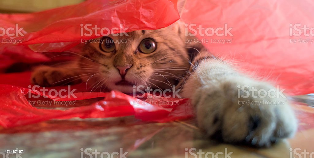 Gift pack.. with surprising cat stock photo