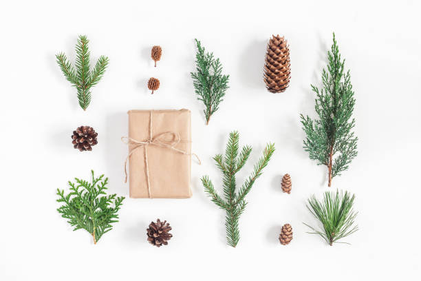 Gift, winter plants on white background. Flat lay, top view stock photo