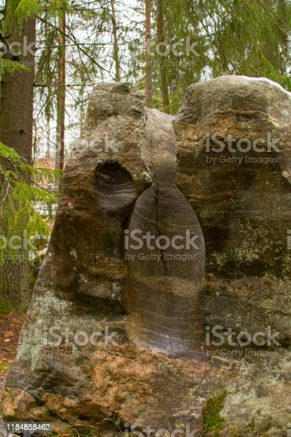 Photo of Gigantic boilers in the nature reserve