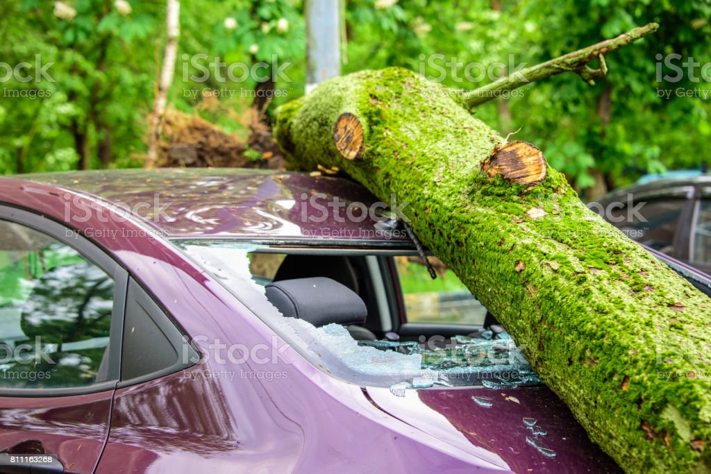 Gigantic fallen tree crushed parked car as a result of the severe hurricane winds in one of courtyards of Moscow stock photo
