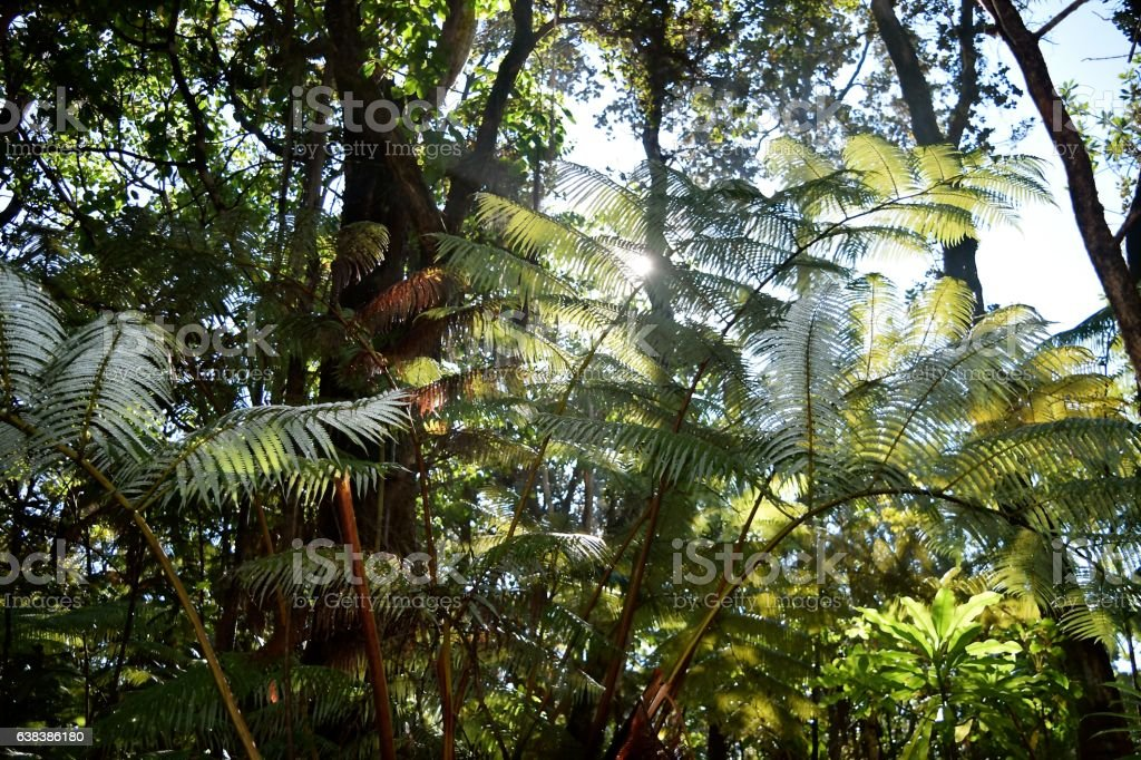 Gigantic Fern stock photo