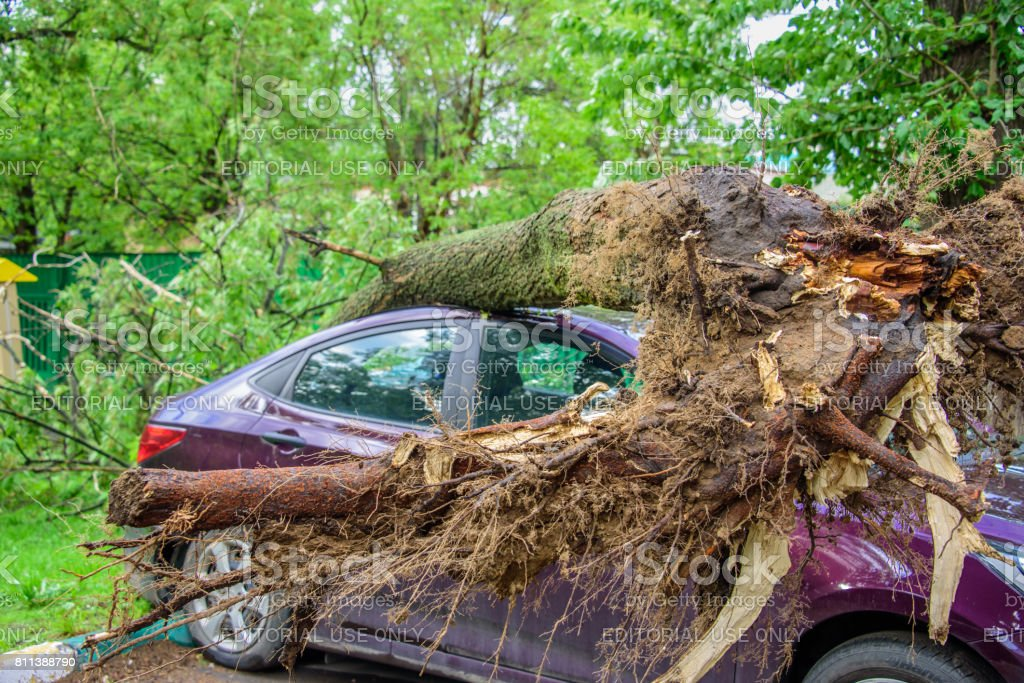 Gigantic roots of the toppled tree crushed parked car as a result of the severe hurricane winds in Moscow stock photo