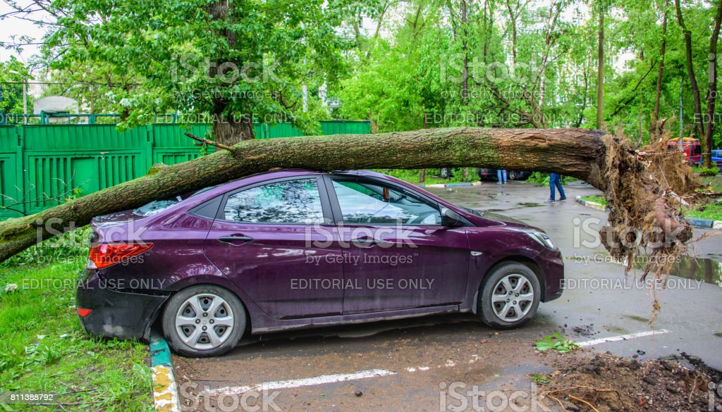 Gigantic toppled tree crushed parked car as a result of the severe hurricane winds in Moscow stock photo