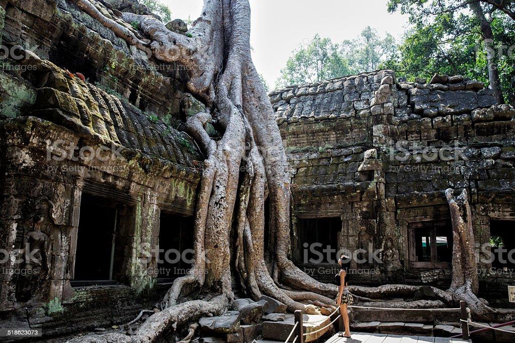 Gigantische Wurzel im Ta Prohm Tempel, Angkor/Kambodscha 2013 stock photo