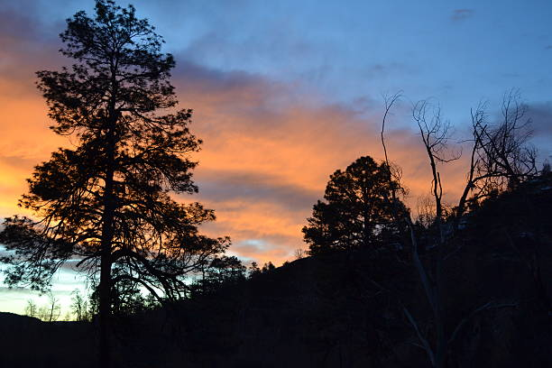 Gila Dawn stock photo