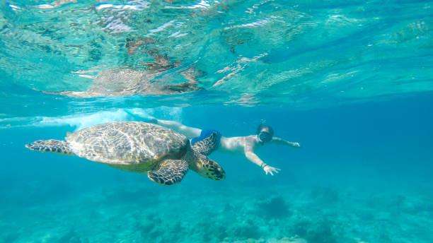 gili island-een man duiken met schildpad - lombok stockfoto's en -beelden