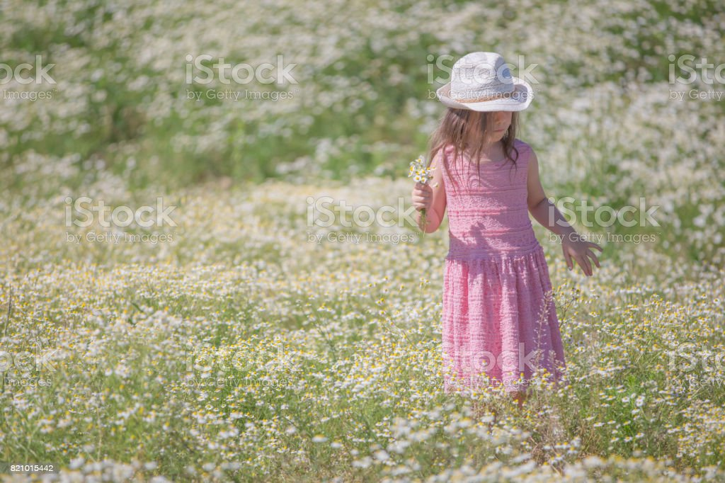 Gilr in a camomile field stock photo