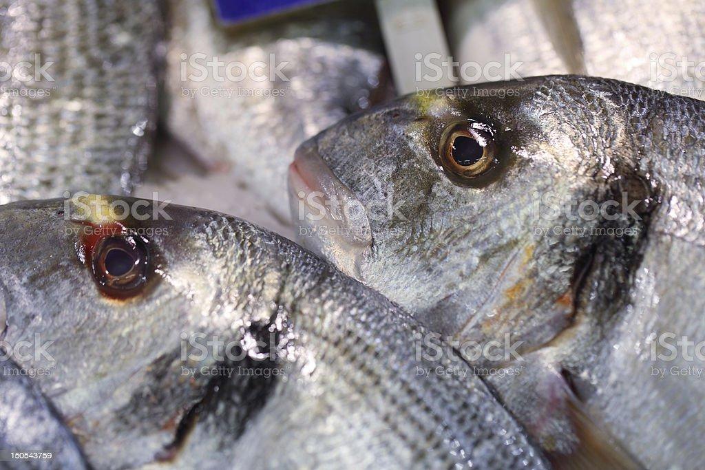 Gilt Head at Fish Market royalty-free stock photo