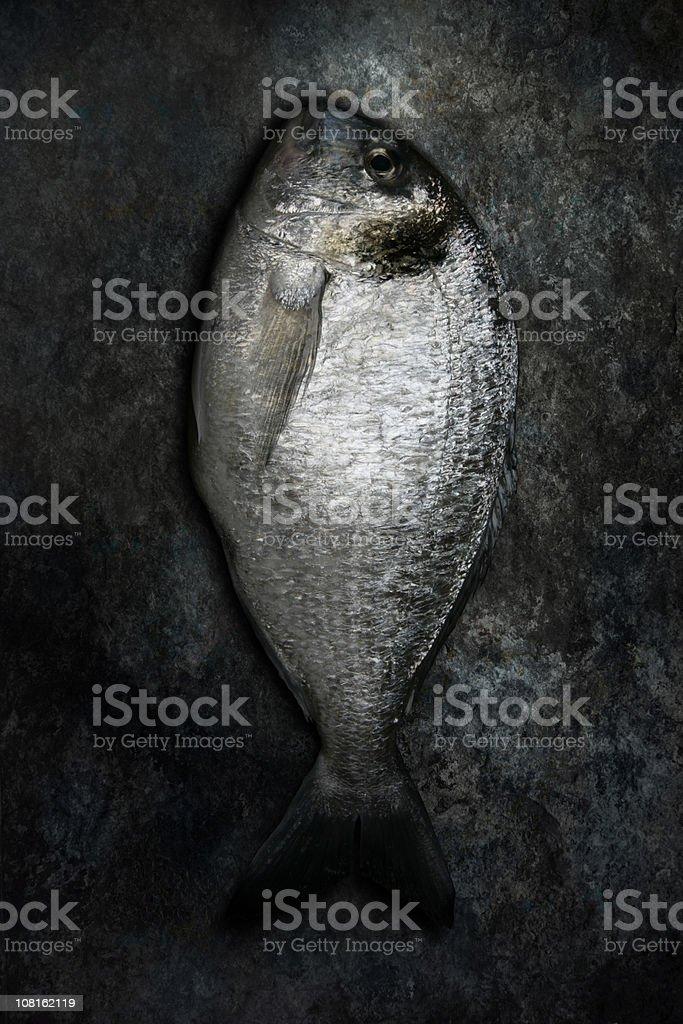 Gilt-head Bream Fish Lying on Grunge Background royalty-free stock photo