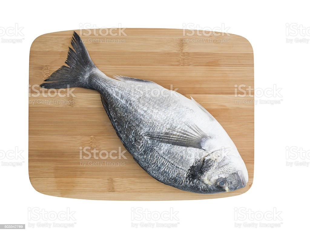 Gilthead seabream royalty-free stock photo