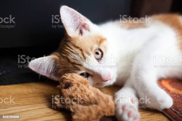 Ginger and his toy picture id858285898?b=1&k=6&m=858285898&s=612x612&h=ayopa4cf7db9qljjspsyntmeqsni6hhikt cyhgde5g=