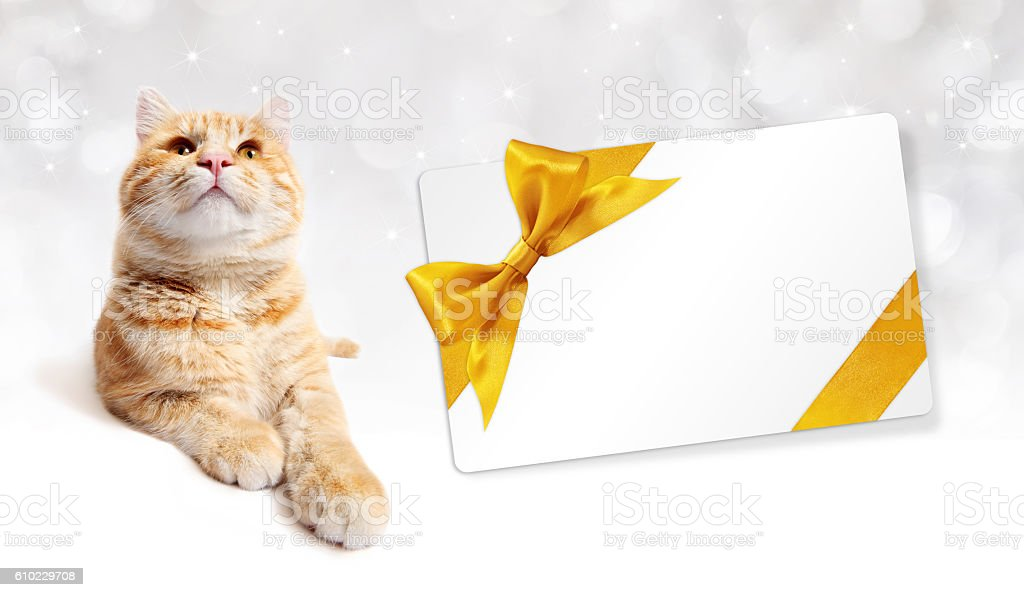 ginger cat and gift card with golden ribbon bow stock photo
