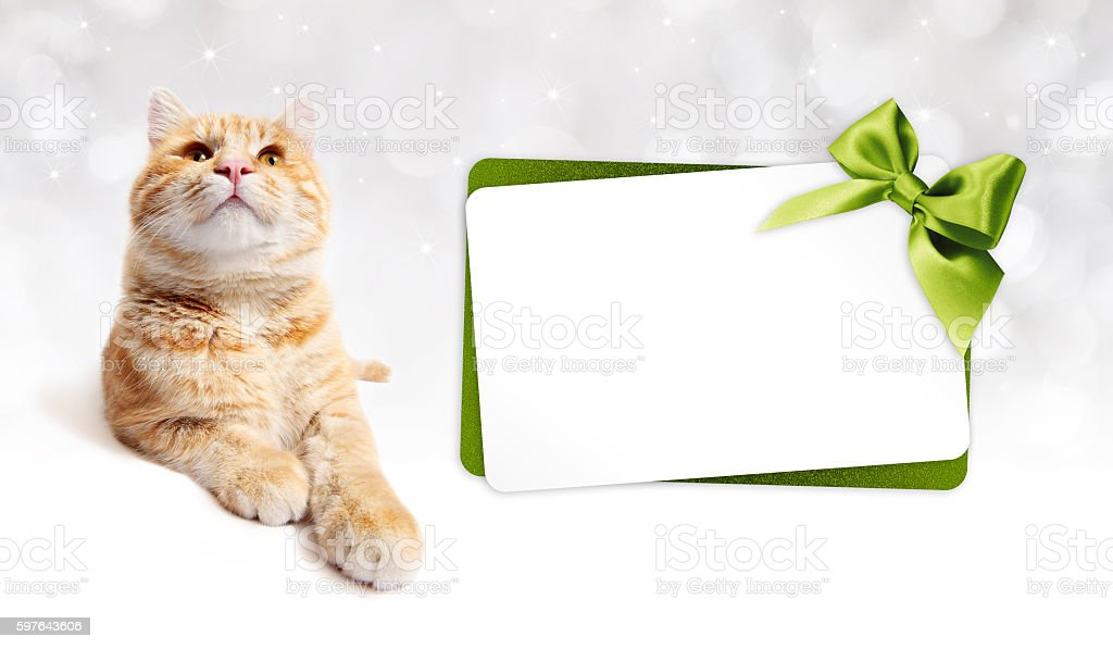 ginger cat and gift card with green ribbon bow stock photo