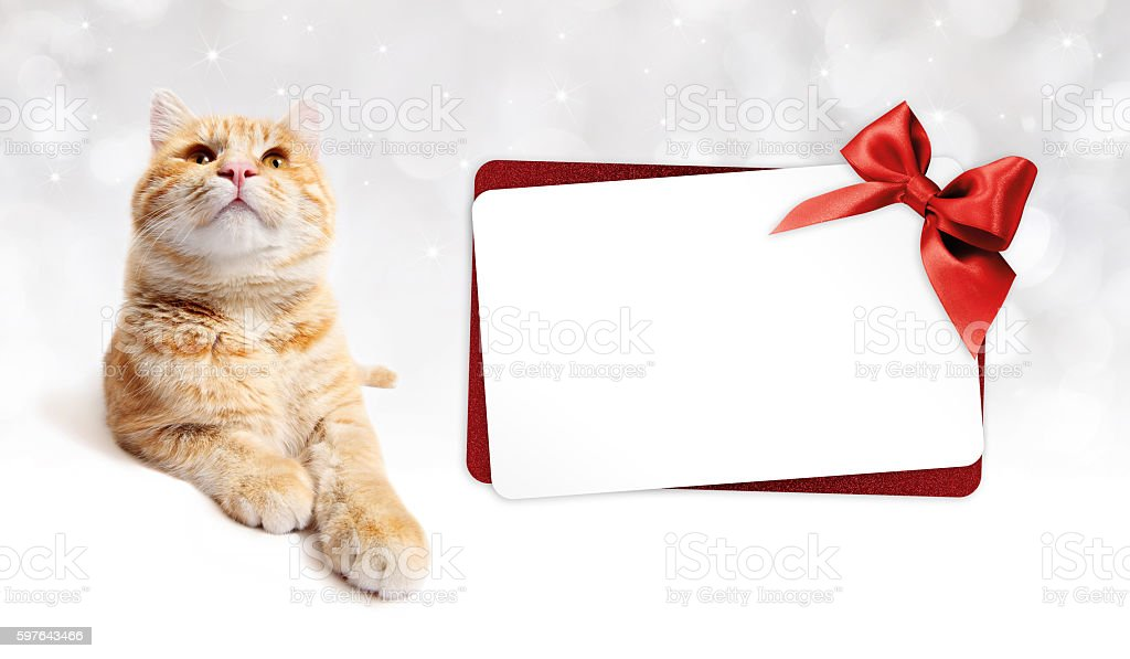 ginger cat and gift card with red ribbon bow stock photo