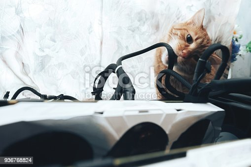 936768788istockphoto Ginger Cat Bite the Wires 936768788 ... on deer eat, penguins eat, cows eat, tigers eat, snakes eat, spiders eat, seals eat, squirrels eat, mice eat, rodents eat,
