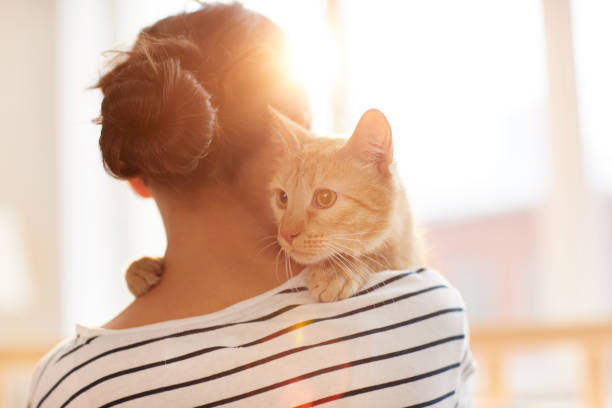 ginger cat embracing owner - pet owner stock pictures, royalty-free photos & images