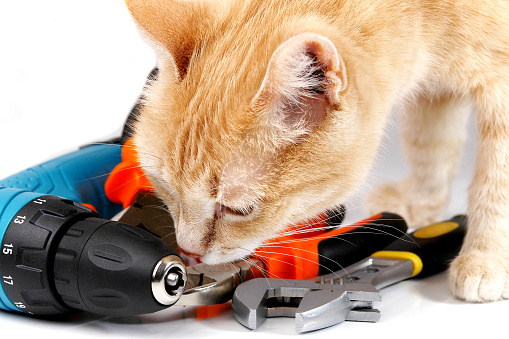 Ginger Cat Examining Hand Tools Stock Photo & More Pictures