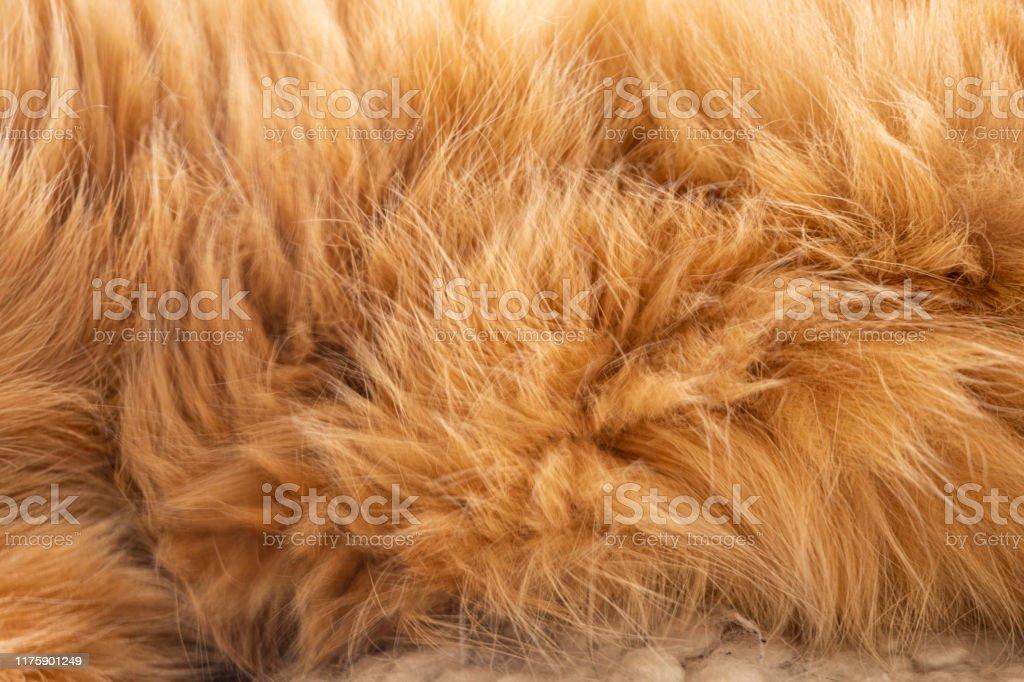 ingefära katt päls - Royaltyfri Abstrakt Bildbanksbilder