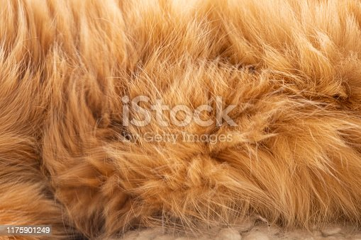 close up of ginger cat fur