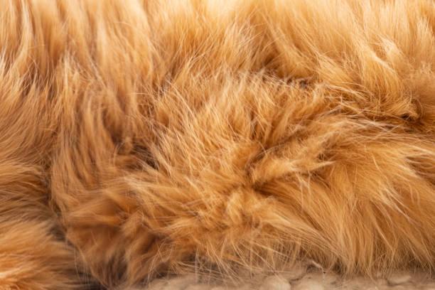 ingefära katt päls bildbanksfoto