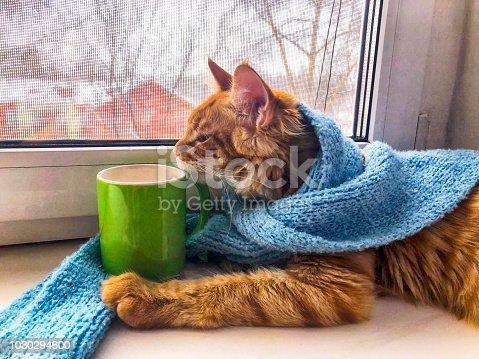 Ginger cat in blue scarf with green mug on the window