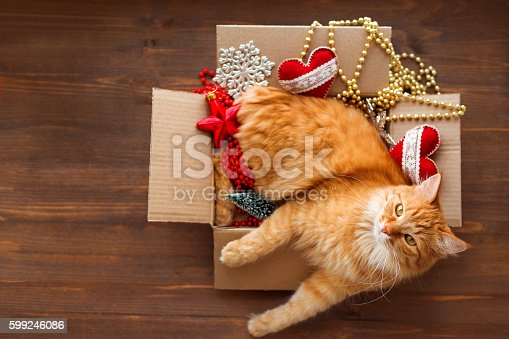 istock Ginger cat in box with Christmas and New Year decorations 599246086