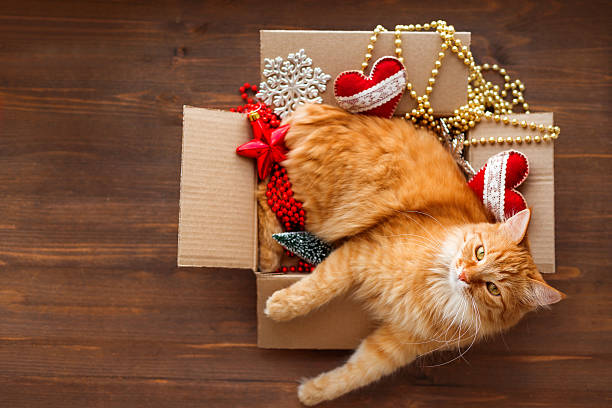 Ginger cat in box with christmas and new year decorations picture id599246086?b=1&k=6&m=599246086&s=612x612&w=0&h=hulnwcp5z4y1 oi4wcq6akbsub rnghelxyloyjdabq=