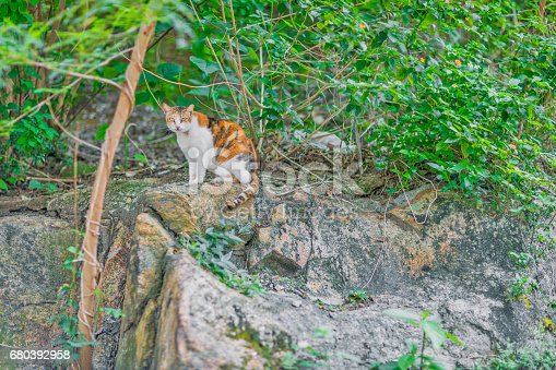 Ginger cat in grass, outdoor, summer