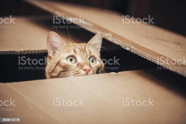Ginger cat in the box picture id933610278?b=1&k=6&m=933610278&s=612x612&h=qijdkc0ovql5g0f uzyrkobgbnbsi hmzwxixpodksu=