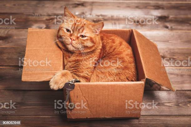 Ginger cat lies in box on wooden background in a new apartment ginger picture id908062648?b=1&k=6&m=908062648&s=612x612&h=vz 70ng7zsvst3ydgksoufmmvpxh2wfpcuqqafmbbnu=