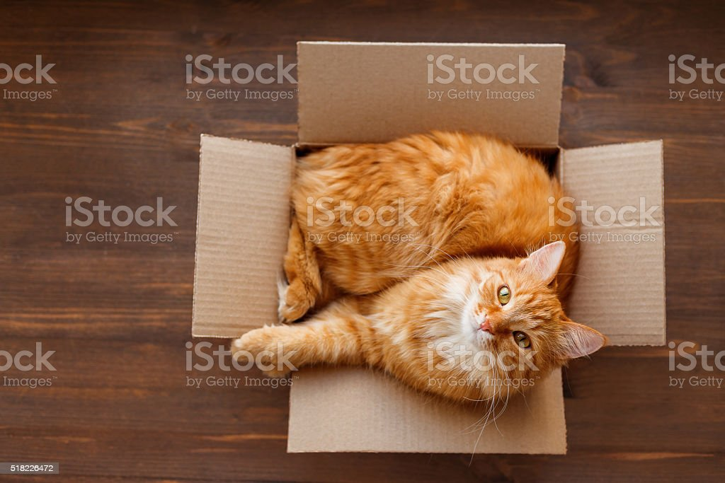 Ginger cat lies in box on wooden background. stock photo