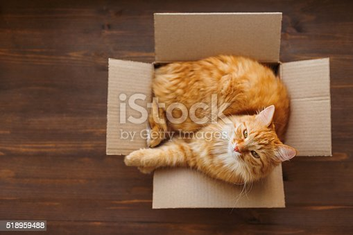 istock Ginger cat lies in box on wooden background. 518959488