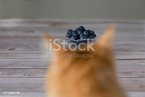 istock Ginger Cat Looking at the Jar of Blueberry 1272064763