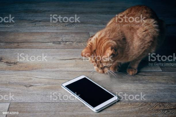Ginger cat looks curious on a tablet computer who lies on a wooden picture id938142010?b=1&k=6&m=938142010&s=612x612&h=vp1blswxevhizqajozm m5zuwjqmvmxicqf8ectx cu=