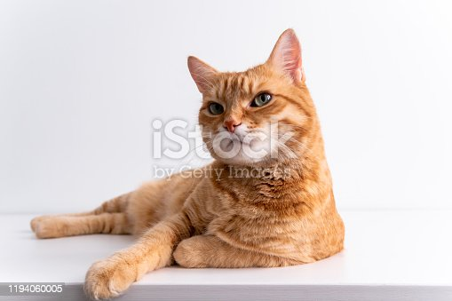 Ginger cat lying on a white table and looking in camera peacefully. Cute cat with green eyes. At the veterinarian. Patient pet