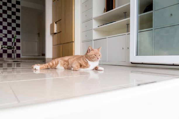 ingwer-katze am boden des wohnzimmers - katzenschrank stock-fotos und bilder