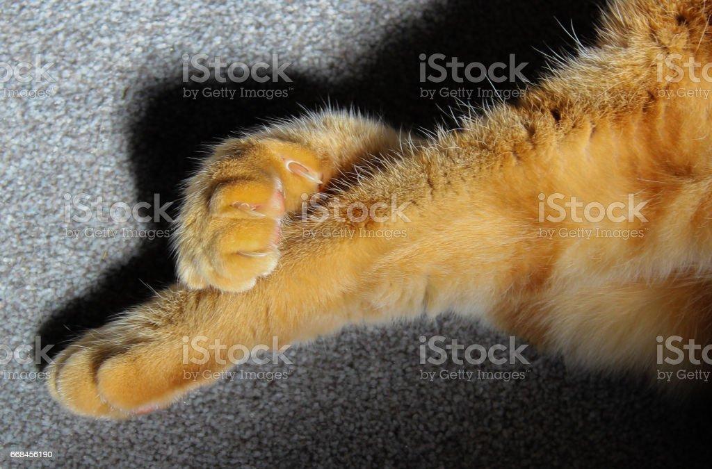 Ginger cat paws crossed legs stock photo