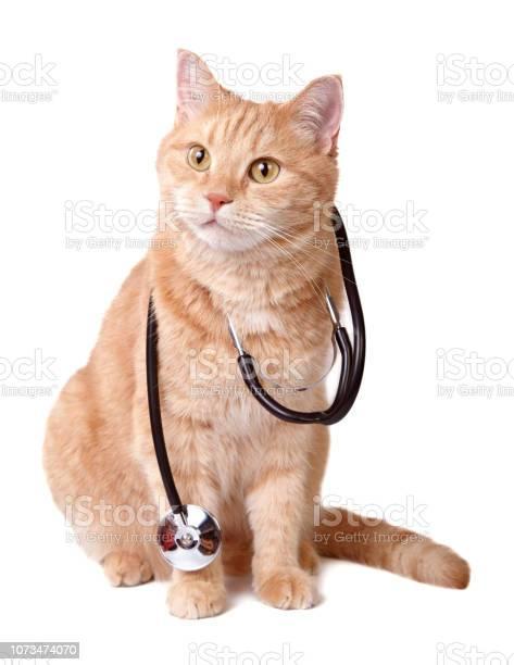 Ginger cat picture id1073474070?b=1&k=6&m=1073474070&s=612x612&h=gox5lf a0hatr4uokamicoqmi4tozidgkadnmkuxesi=