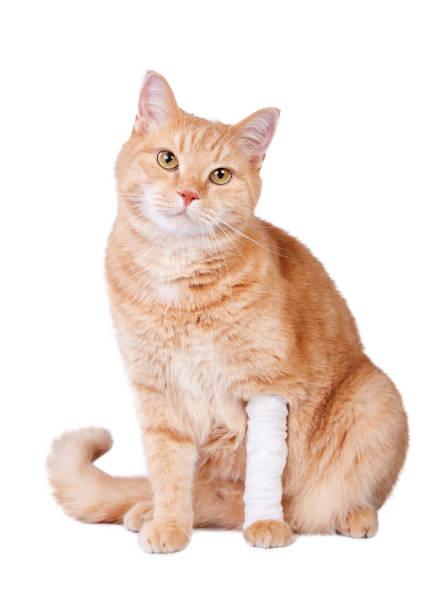 Ginger cat picture id1073474096?b=1&k=6&m=1073474096&s=612x612&w=0&h=jz j uexvby1fgbn9lme4njhj hffmsajgu5877s0n8=