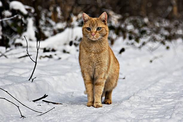 Ginger cat picture id157561822?b=1&k=6&m=157561822&s=612x612&w=0&h=1chne 9ags4fuhtiv6mhcpjc9u2if2zarz3oem370cs=