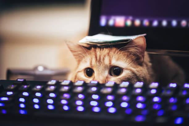 Ginger cat picture id900904356?b=1&k=6&m=900904356&s=612x612&w=0&h=keiewv  evx5ujrmdvft307soecfs5xayzs p4ctxow=