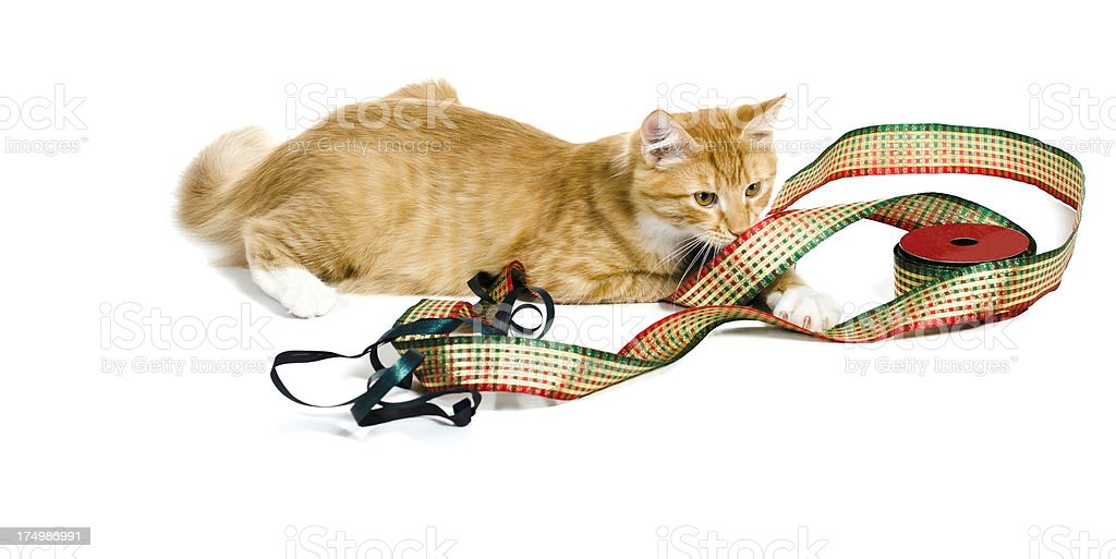 Ginger Cat Playing with Ribbon royalty-free stock photo